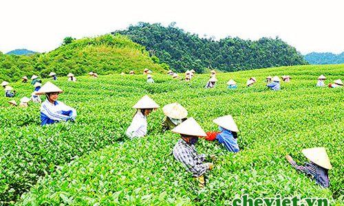 Độc đáo trà Việt