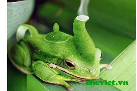 Ấm trà ếch xanh