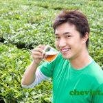 trà xanh phòng bệnh loãng xương