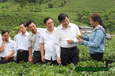 Chủ tịch Nước chia sẻ về giá trị của sản phẩm chè Thái Nguyên với sức khỏe và đời sống người dân