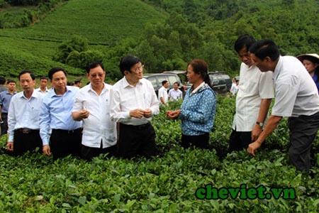 chủ tịch nước thích trà Thái Nguyên