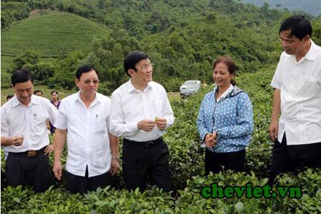 Chủ tịch Nước Trương Tấn Sang ân cần hỏi han về đời sống người trồng chè