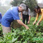 nông dân trồng chè Thái Nguyên