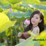 KHông chỉ là chụp hoa sen, nhiều bạn trẻ còn thích thưởng trà ướp sen Hồ Tây.