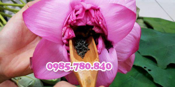 Cách pha trà ướp trong bông hoa sen