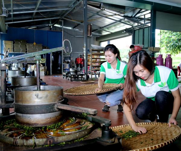 Vò chè Thái Nguyên
