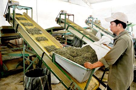 Phá đường dây làm giả trà Thái Nguyên