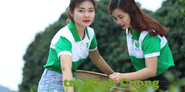 Sản xuất chè Thái Nguyên Vietgap gặp khó