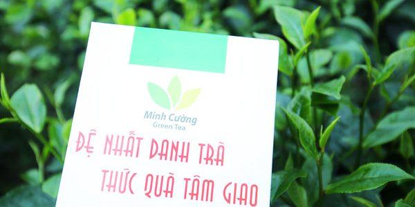 Giá chè Thái Nguyên xuất khẩu giảm