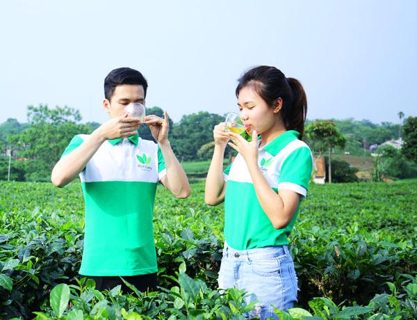 Phương pháp pha trà