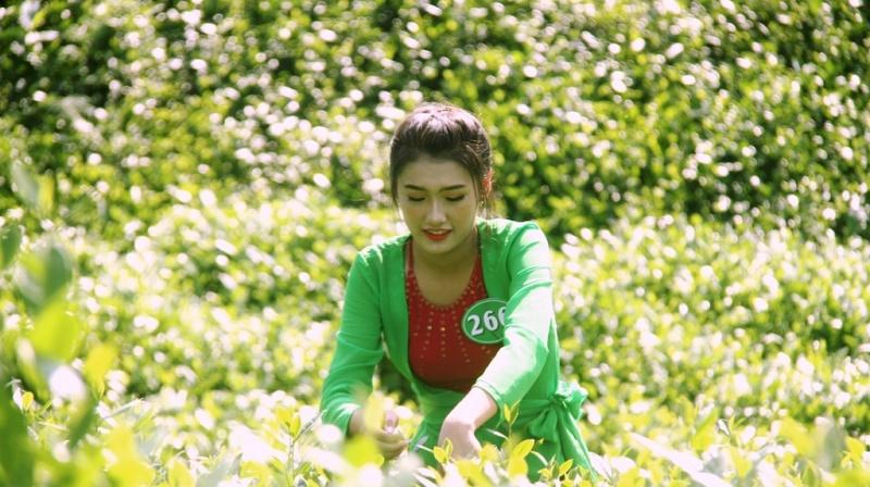 Người đẹp hái chè Thái Nguyên