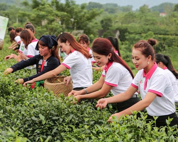 Thí sinh Người đẹp xứ trà 2017