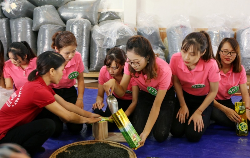 Người đẹp xứ Trà Thái Nguyên đóng gói sản phẩm trà