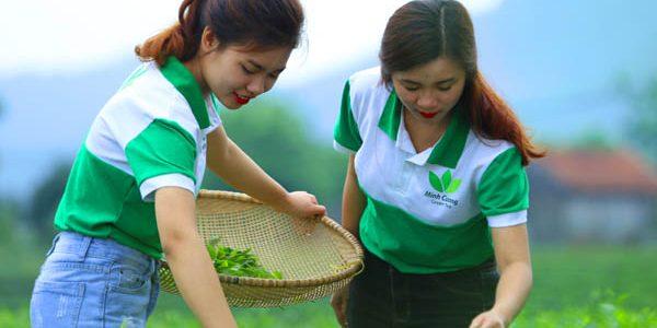 Khó khăn trong sản xuất chè Thái Nguyên hữu cơ