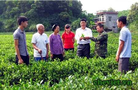 Chè La Bằng trên đất trà Thái Nguyên