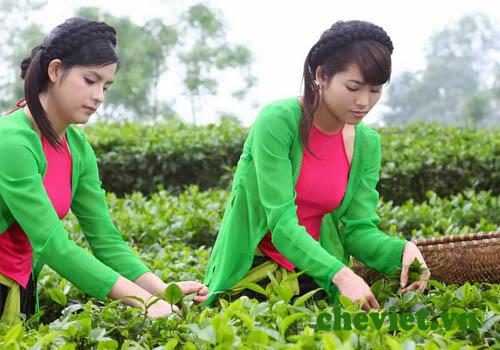 Đại lý chè Thái Nguyên ở tại Hà Nam, Nam Định