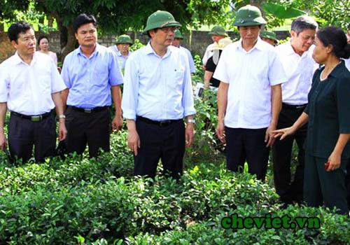 Bộ trưởng Cao Đức Phát trò chuyện với người trồng chè Thái Nguyên