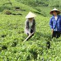 Kế hoạch tổ chức Festival Trà Thái Nguyên lần thứ 3, năm 2015, Kế hoạch tổ chức Festival Trà Thái Nguyên lần thứ 3, năm 2015