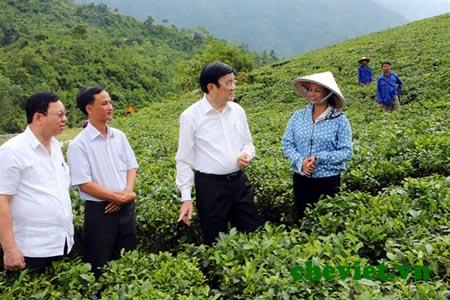 Chủ tịch mong muốn bà con Thái Nguyên nâng cao chất lượng và sản lượng chè, góp phần làm giàu trên quê hương