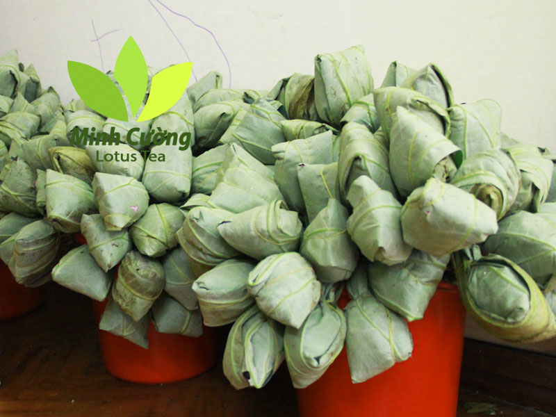 Sau khi bọc lá sen, trà bông sen được cắm trong nước sạch với một khoảng thời gian nhất định