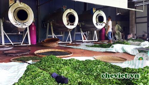Chè Tân Cương Thái Nguyên được sản xuất thế nào
