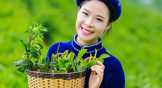Giá trà xuân Thái Nguyên