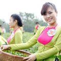 Trà Thái Nguyên góp phần xây dựng văn minh trà việt