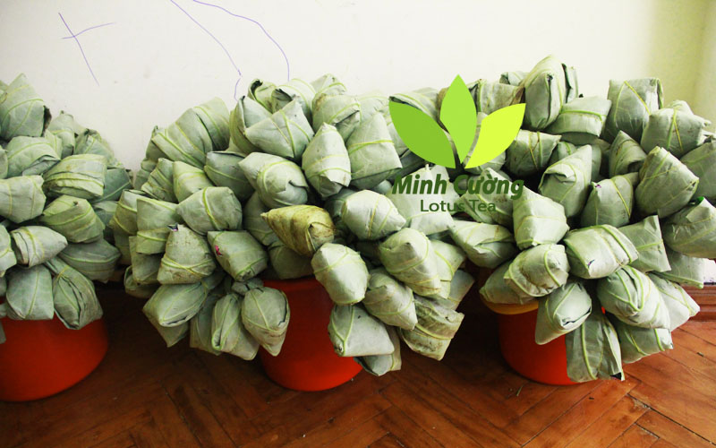 Trà ướp trong hoa sen tươi