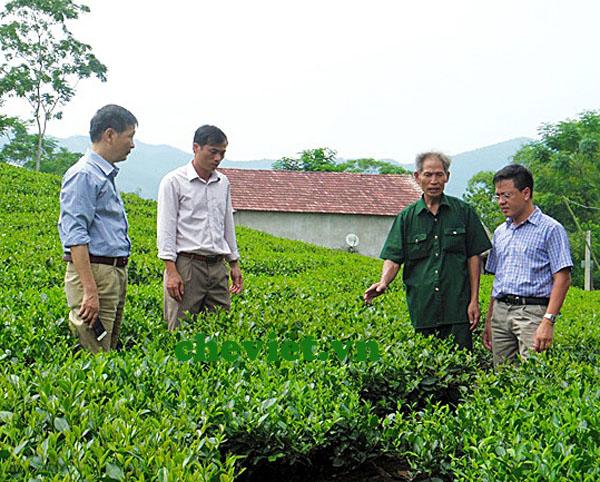 Phấn đấu có 200 ha chè Thái Nguyên VietGAP, Phấn đấu có 200 ha chè Thái Nguyên VietGAP