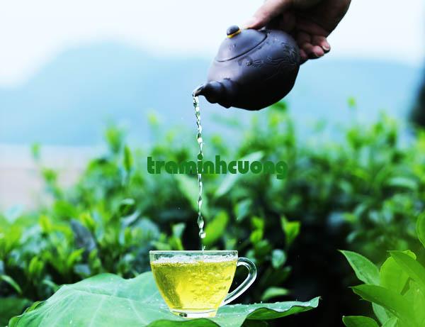 Tách trà thái nguyên ngon nhất của tiệm trà Minh Cường