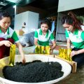 sản xuất chè Thái Nguyên bán Tết
