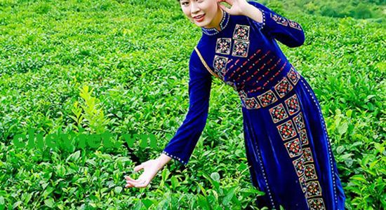 Trà xuân Thái Nguyên