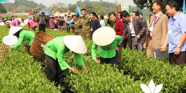 Trà Thái Nguyên: vùng trà Trại Cài mở hội