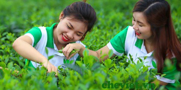 Đất chè Thái Nguyên mời gọi đầu tư