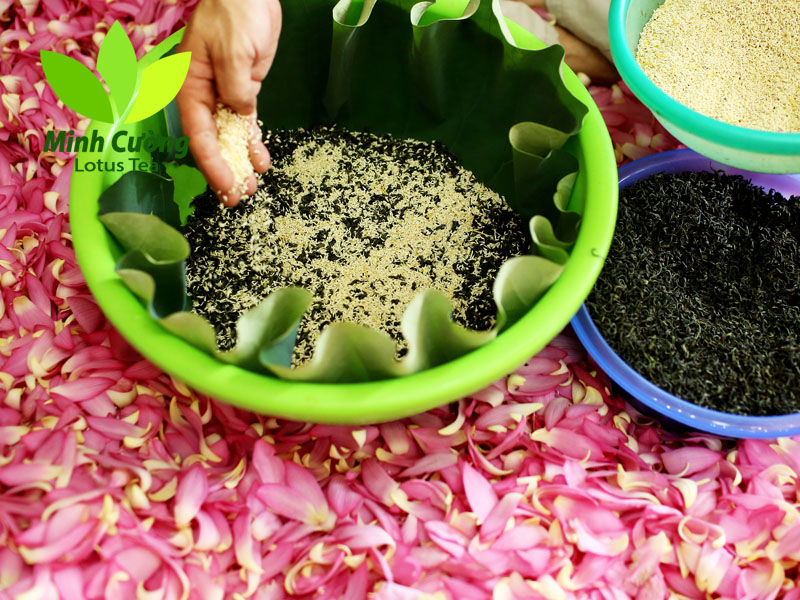 Công đoạn ướp trà với gạo sen, ủ hương cho trà